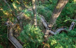Footbridge trails in Capilano suspension bridge park,...