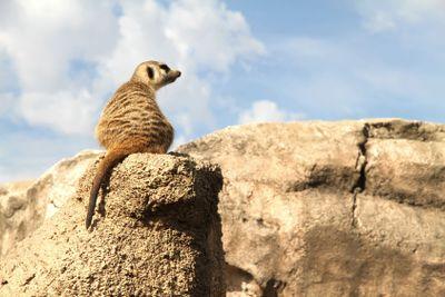 Relaxed Meerkat