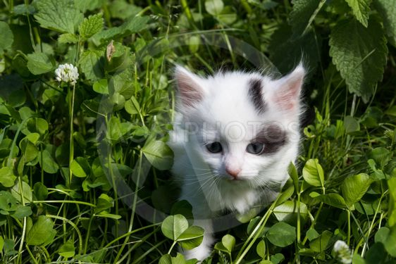 Small kitten in green grass