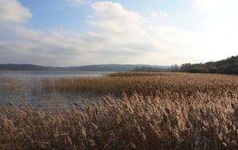 Utsikt över sjön