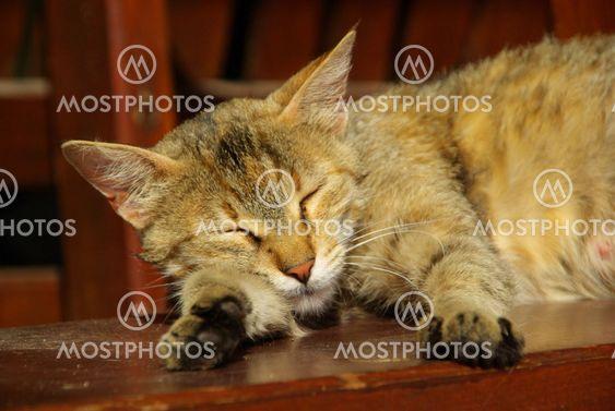 Katze - cat 18