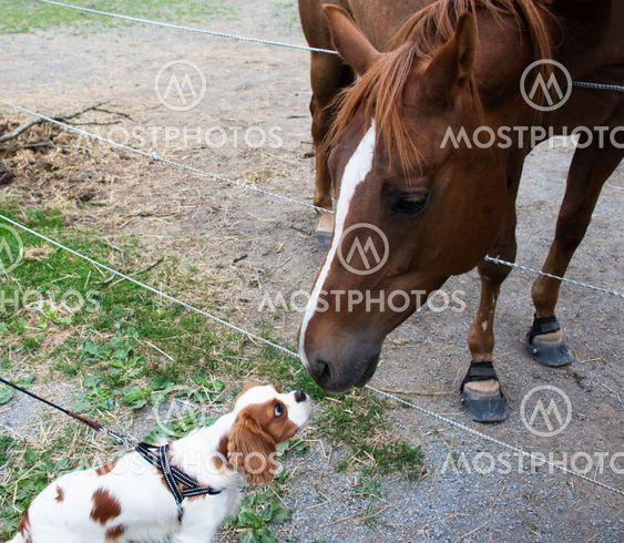 Hund och häst nosar på varandra