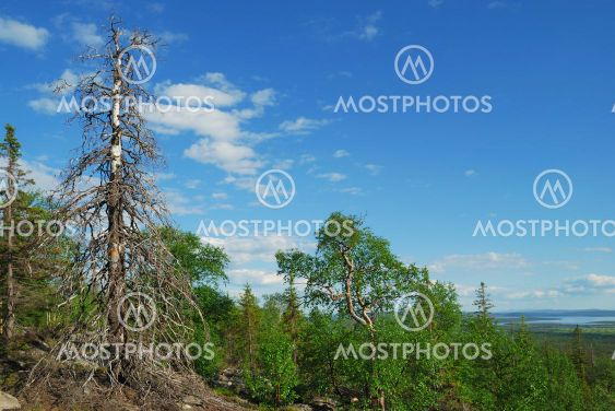 Summer landscape of the north
