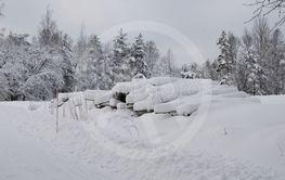 Timmer i snö