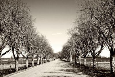 Trees along the roadside