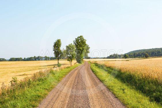 Grusväg bland sädesfälten
