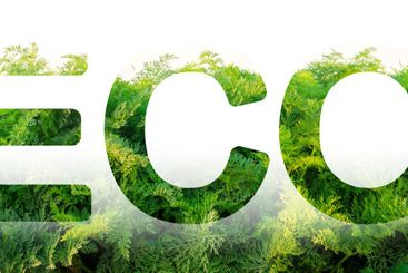 Eco word on the background of green leaves of carrots....