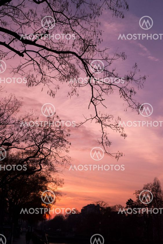 trees silhouettes on pink sunset background