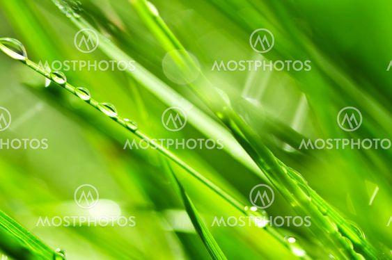 Grønne græs baggrund