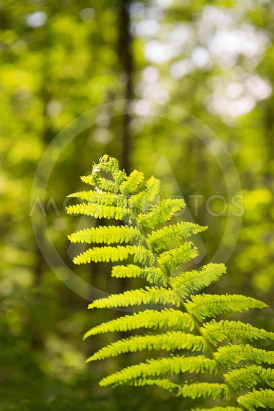 Forest landscape with fern