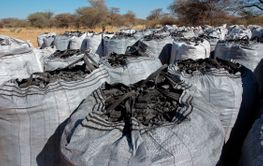 Bags of charcoal on a rural farm - Namibia