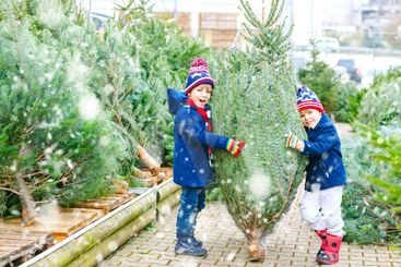 two little kid boys buying christmas tree in outdoor shop