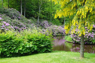 Rhododendronberget