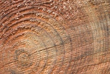 Concentric Rings on a Log