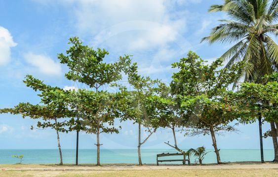 Seascape with tropical almond tree on beach
