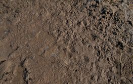dark brown mud background