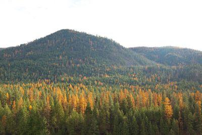 Fall Mountain Side