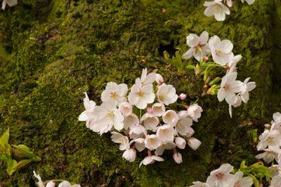 Flowering trunk