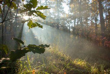 Beautiful morning scene, sun rays break through the...