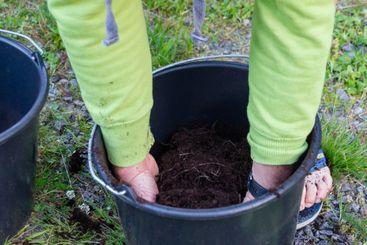 En man odlar och skördar färskpotatis i hink - Silvertid