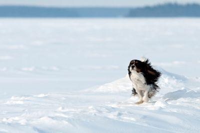 Hund springer på isen