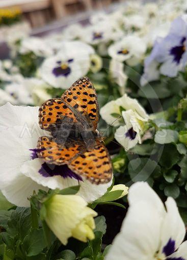 Vacker fjäril