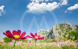 Landscape nature background of beautiful pink and red...