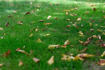campo cubierto de hierba