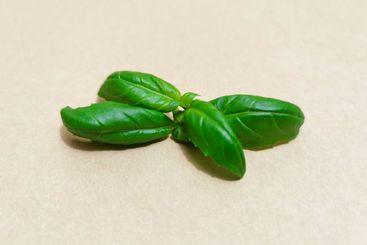 Closeup of basil leaves