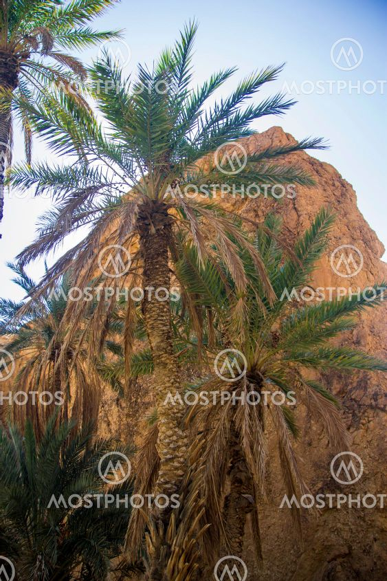 Date palm trees against blue sky