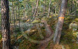 vandringsled med orange markering på träd