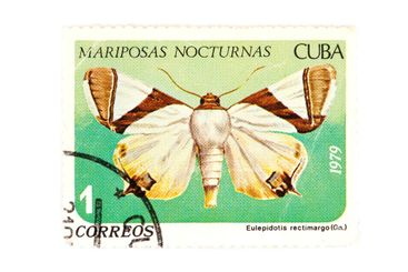 postage stamp butterfly closeup