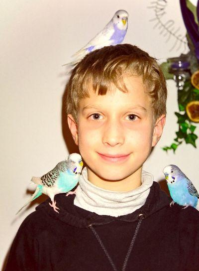 My birds, Meine Wellensittiche
