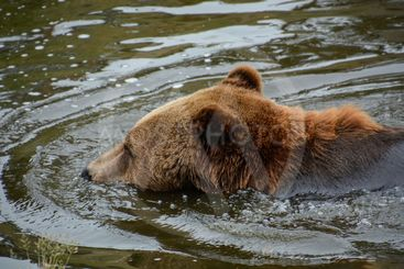 björn simmar
