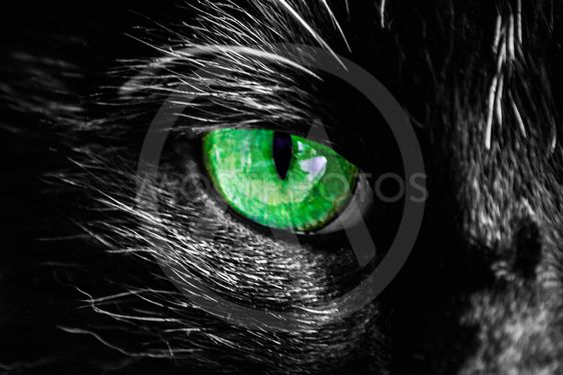 Katt öga