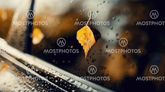 A yellow autumn leaf stuck to the wet car window.