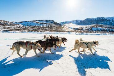 Husky dogs running on frozen sea pulling a sledge.