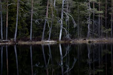 Trees reflecting in the water of a calm forest lake.