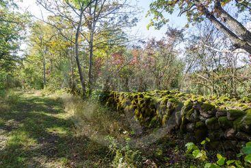 Mossig stenmur vid vandringsled genom Karås...