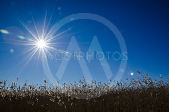 Sunbeams over the reeds