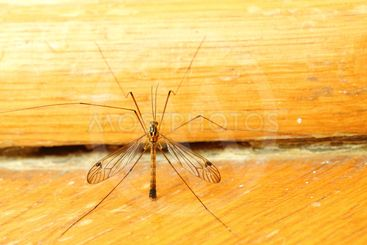 mosquito sitting on wall indoor