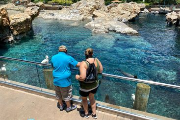 A man and woman feeding fish to the harbor seals and sea...