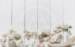 Seashells and coral reefs on white wood background and...
