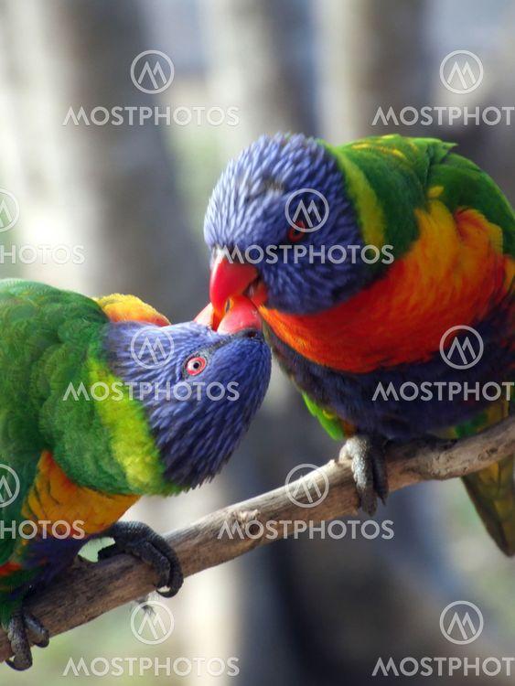Kissing Rainbows