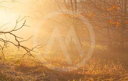 autumn forest mist with sunlight rays