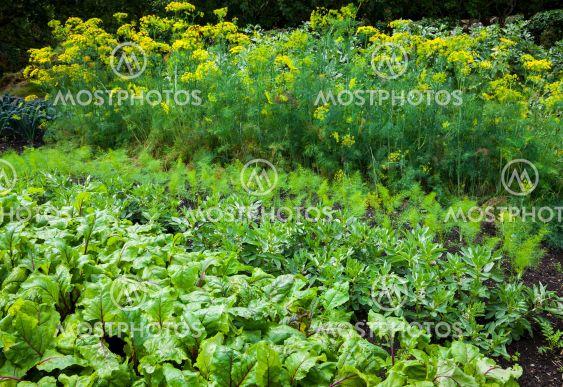 Vegetable garden - variety