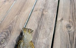bird killed by hitting the glass on the terrace of the...