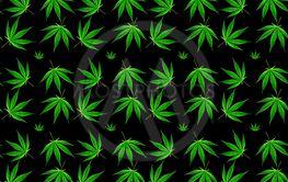 marijuana leaves seamless background