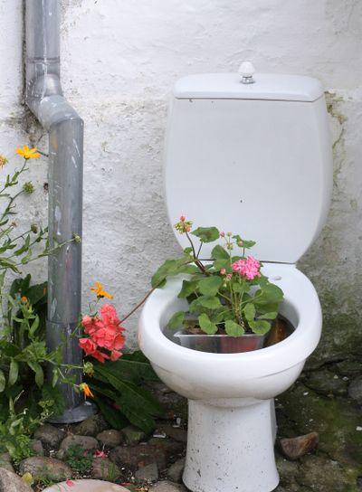 Flowers in toilet