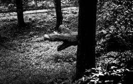 svartvit bild